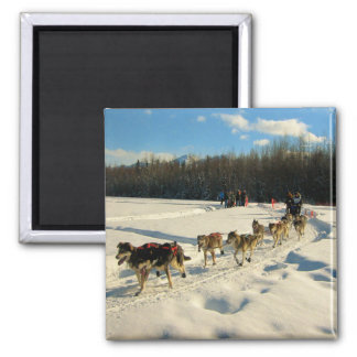 Iditarod Trail Sled Dog Race Magnet