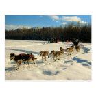 Iditarod Trail Sled Dog Race Postcard