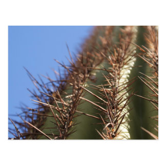 IDKP Thorny cactus post card