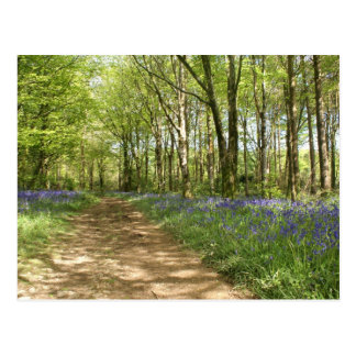 Idless Woods Postcard