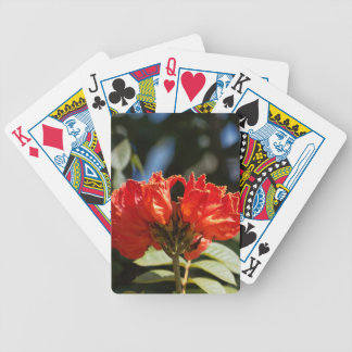 iFlowers of an African tuliptree Bicycle Playing Cards
