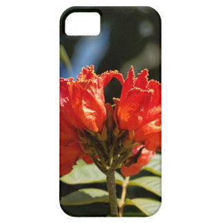 iFlowers of an African tuliptree Case For The iPhone 5