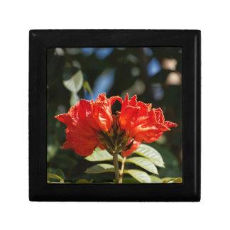 iFlowers of an African tuliptree Gift Box