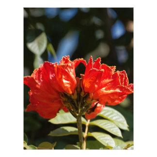 iFlowers of an African tuliptree Letterhead