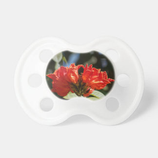 iFlowers of an African tuliptree Pacifier