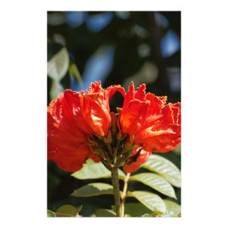 iFlowers of an African tuliptree Stationery