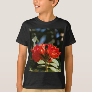 iFlowers of an African tuliptree T-Shirt