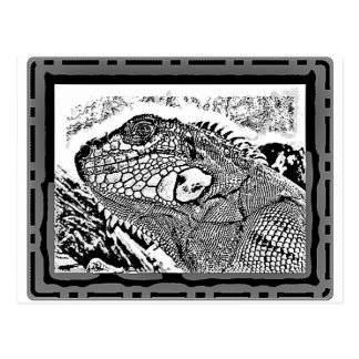 Iguana black/white postcard