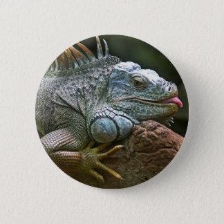 Iguana buttons