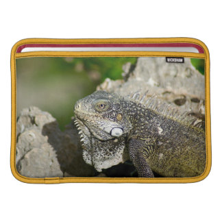 "Iguana, Curacao, Caribbean islands, Photo 11"" MacBook Sleeve"