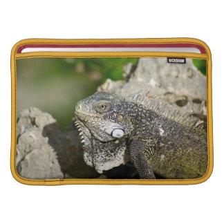 "Iguana, Curacao, Caribbean islands, Photo 11"" MacBook Sleeves"