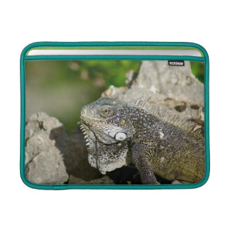 "Iguana, Curacao, Caribbean islands, Photo 13"" Sleeve For MacBook Air"