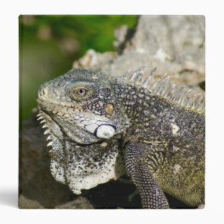 Iguana, Curacao, Caribbean islands, Photo Binder