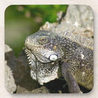 Iguana, Curacao, Caribbean islands, Photo Coaster