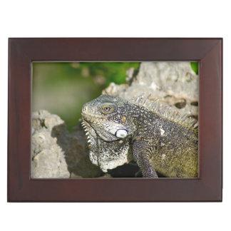 Iguana, Curacao, Caribbean islands, Photo Keepsake Box