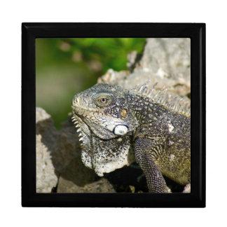 Iguana, Curacao, Caribbean islands, Photo Large Keepsake Boxes