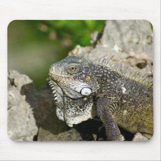 Iguana, Curacao, Caribbean islands, Photo Mouse Pad