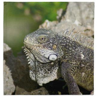Iguana, Curacao, Caribbean islands, Photo Napkin