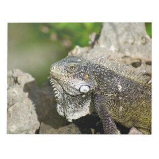 Iguana, Curacao, Caribbean islands, Photo Notepad
