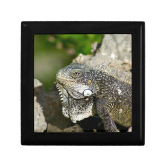 Iguana, Curacao, Caribbean islands, Photo Small Jewelry Boxes