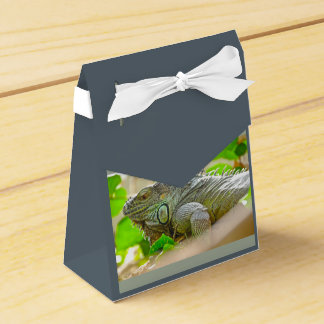 Iguana Favor Box