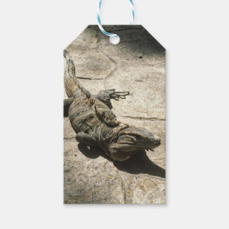 Iguana , Giant Lizard in Mexico Gift Tags