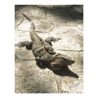 Iguana , Giant Lizard in Mexico Letterhead