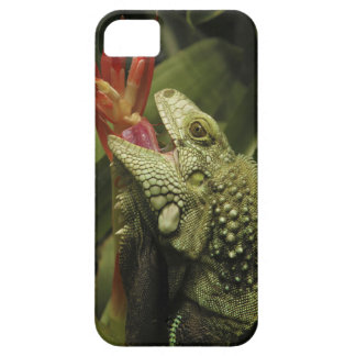 Iguana Western Cape Province, South Africa iPhone 5 Case