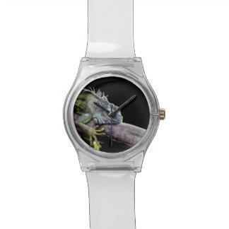 Iguana Wrist Watches