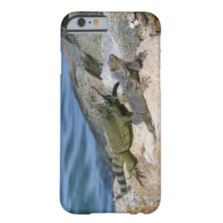 Iguanas Chilling Out Barely There iPhone 6 Case