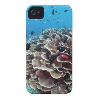 Île de corail coque iPhone 4