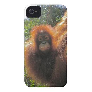 Île d'orang-outan de forêt tropicale du Bornéo Coques Case-Mate iPhone 4