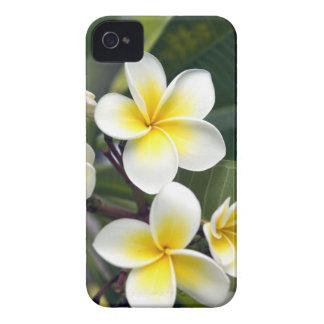 Îles Cook de fleur de Frangipani Étui iPhone 4