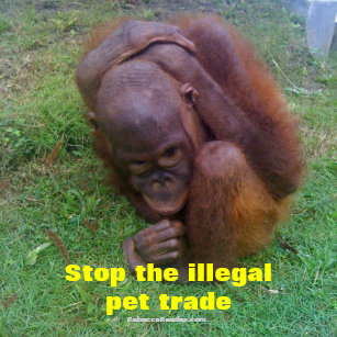 Illegal Pet Trade Gifts on Zazzle CA