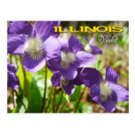 Illinois State Flower: Violet Post Card