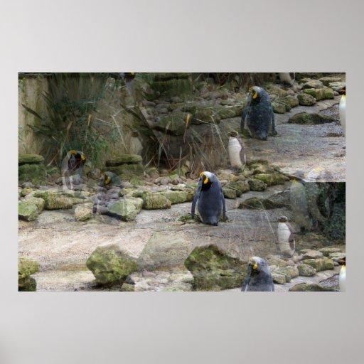 Illuision Penguins Posters