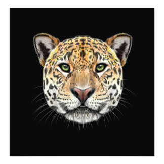 Illustrated portrait of Jaguar. Photo Print