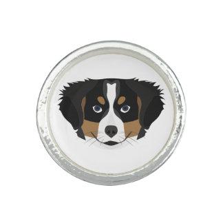 Illustration Bernese Mountain Dog Rings