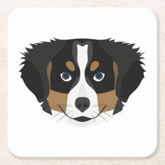 Illustration Bernese Mountain Dog Square Paper Coaster