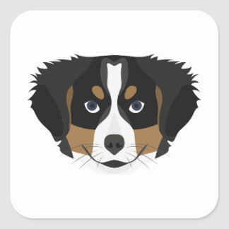 Illustration Bernese Mountain Dog Square Sticker