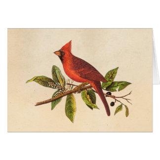 Illustration cardinale vintage d'oiseau de chanson carte de vœux
