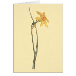 Illustration de fleur de jaune de jonquille de carte