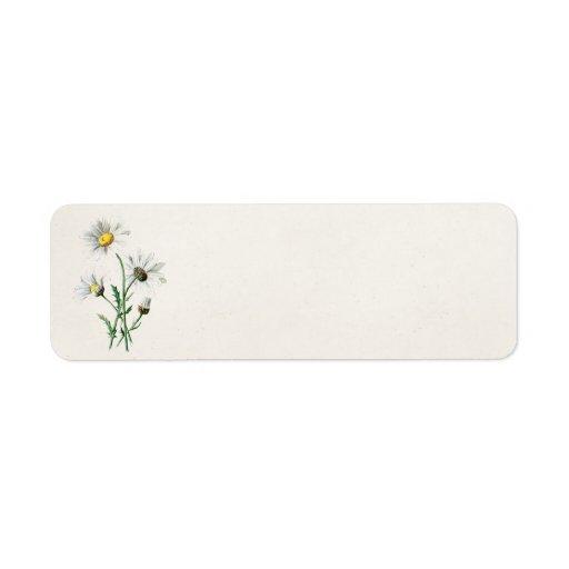 Illustration de fleur sauvage de marguerites du cr étiquette d'adresse retour