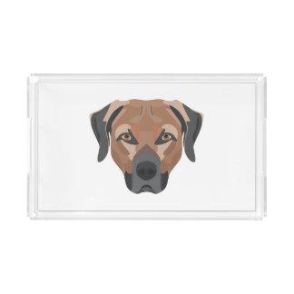 Illustration Dog Brown Labrador Acrylic Tray