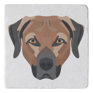 Illustration Dog Brown Labrador Trivet