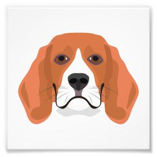 Illustration dogs face Beagle Photo Print