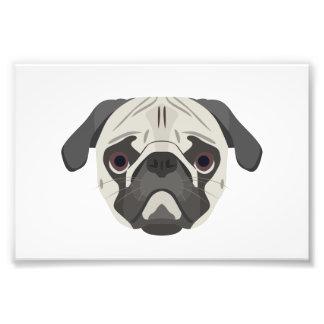 Illustration dogs face Pug Photo Print