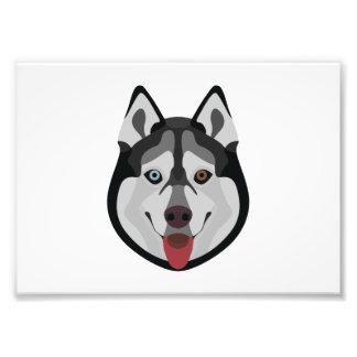 Illustration dogs face Siberian Husky Photo Print