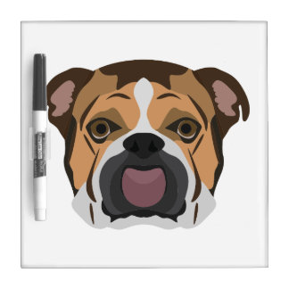Illustration English Bulldog Dry Erase Board