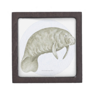 Illustration of a Manatee (Trichechus sp.) Premium Keepsake Boxes